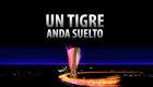 Tigre_suelto